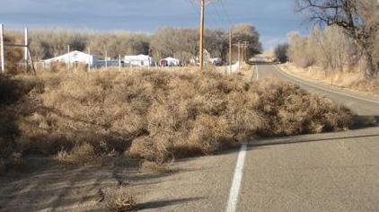 tumble weeds pile