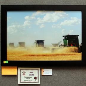 "Area Award, Tylin Williams, ""Fruitful Country"""
