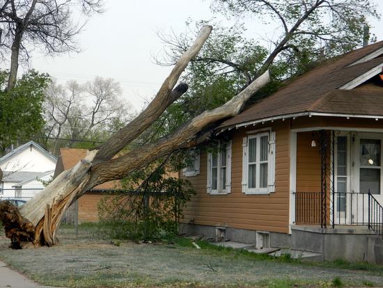 Tree Damage on West Elm Street