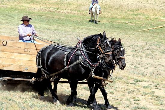 Wagons and Teams on Display