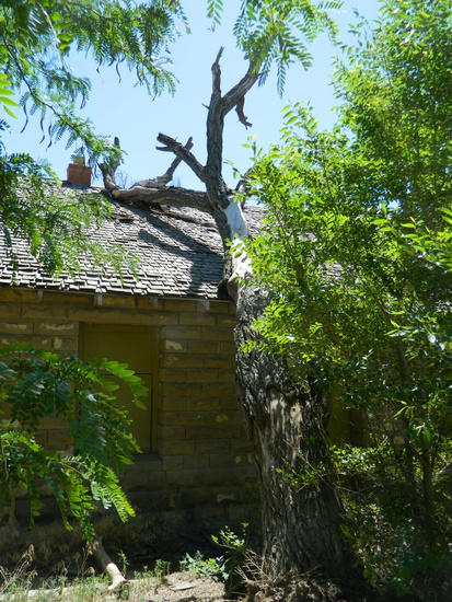 Tree Leaning on Roof, 2014