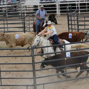 Jack Garrison tries to sort off a specific steer and Clinton Griffin guards the gate, in an April 11 team sorting. The timed event was added to the Bent-Prowers Cattle & Horse Grower's annual festivities, this year held in Las Animas.