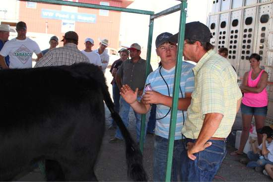Dalton Chambers (with clippers) answer's a question from Kevin Humrich of Holly during the June 20 Steer-Aid Clinic. In the background, RJ Kerchal pauses to share a tip with 4-H beef exhibitors and their parents before proceeding with his demonstration.