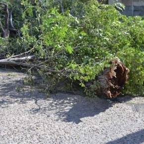 Storm Damage July 2015 (1)