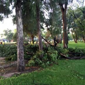 Storm Damage July 2015 (6)