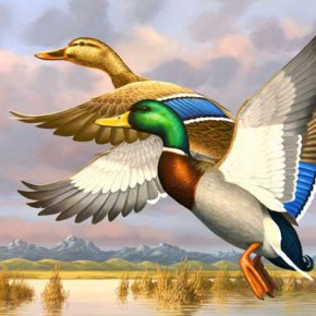 Colorado Marsh Mallards Selected for Top Prize in Waterfowl Art Competition