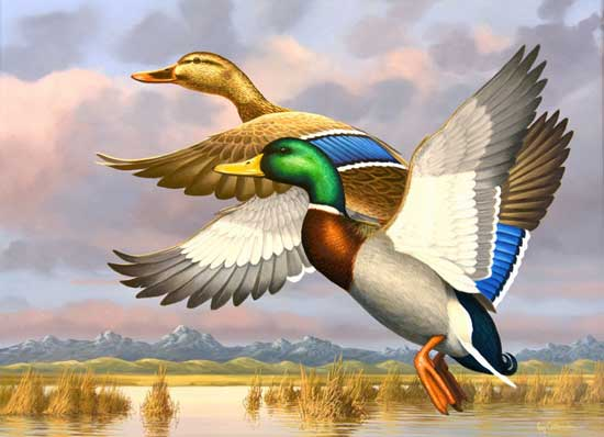Guy Crittenden's original art entitled Colorado marsh mallards is the 2016 Waterfowl stamp winner.
